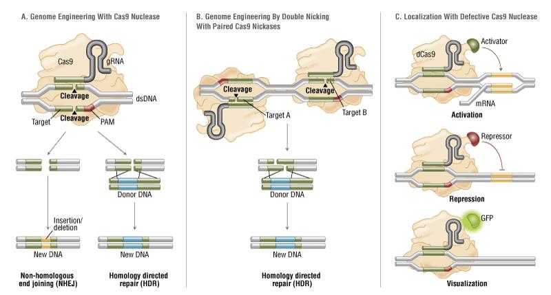 کاربردهای مختلف CRISPR/Cas9
