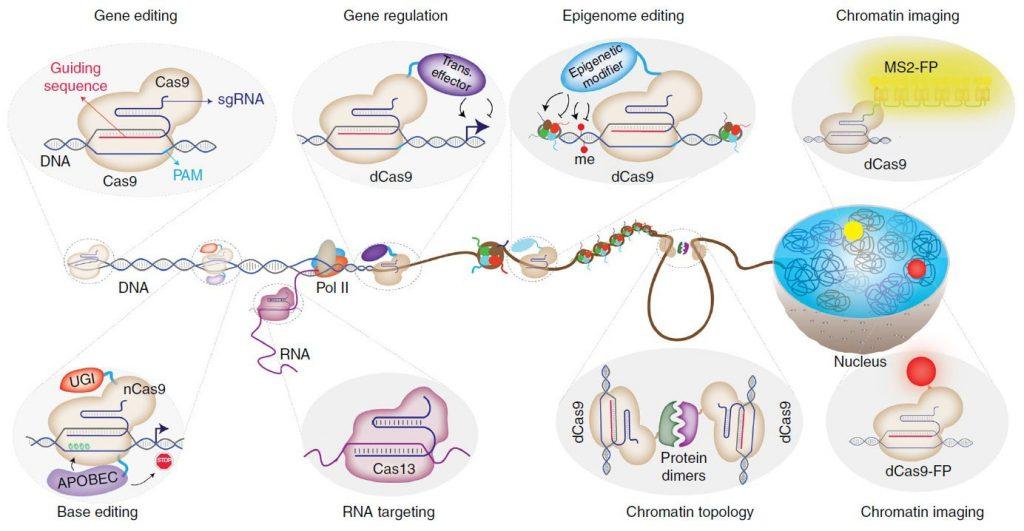 تکنولوژی CRISPR؛ فراتر از ویرایش ژنوم
