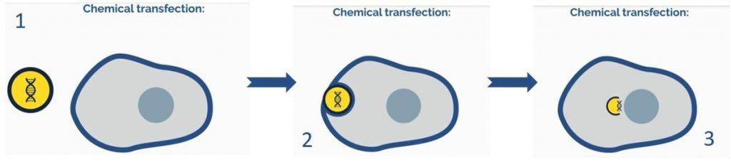 ترانسفکشن با مواد شیمیایی