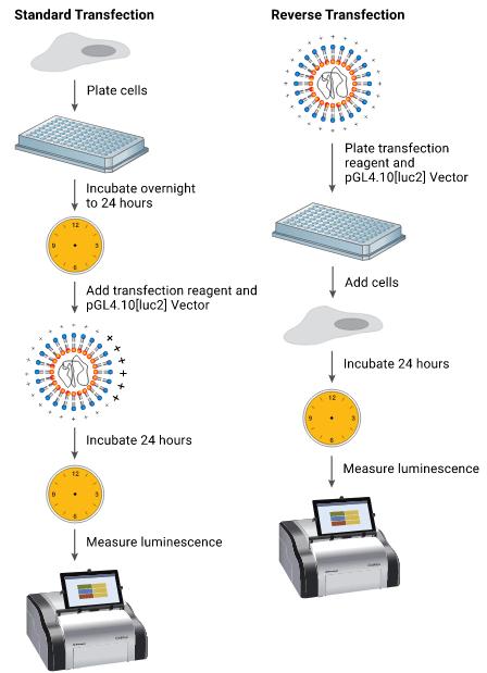 شکل ۱ - تفاوت پروتکل ترانسفکشن استاندارد و پروتکل ترانسفکشن معکوس